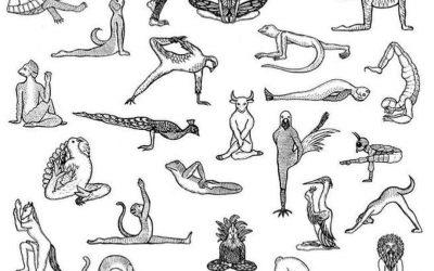 Animales en sus posturas